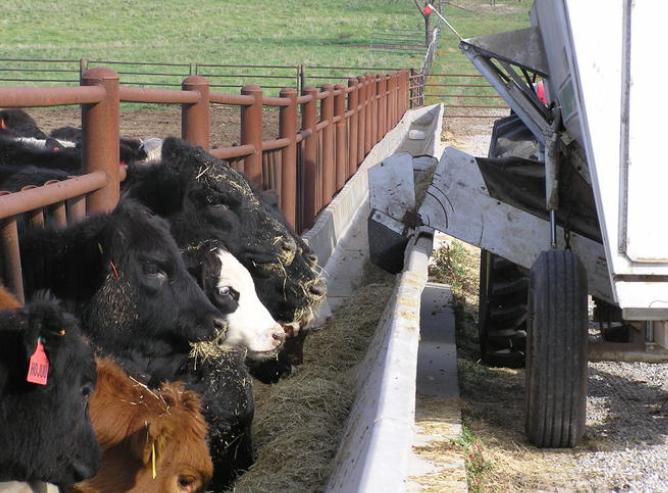 Feed lot handling system